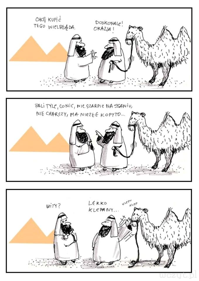 Arab sprzedaje wielbłąda