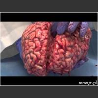 Prezentacja mózgu