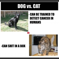 dog vs. cat